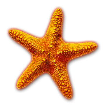 http://belljarblog.files.wordpress.com/2010/01/starfish.jpg